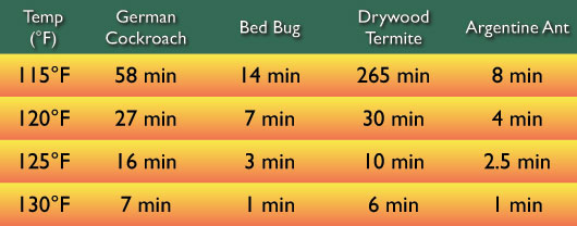 temperature to kill bed bugs